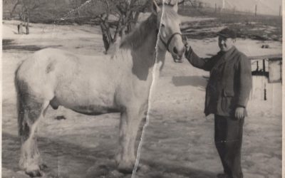 Joey the Draft Horse: Farming before technology