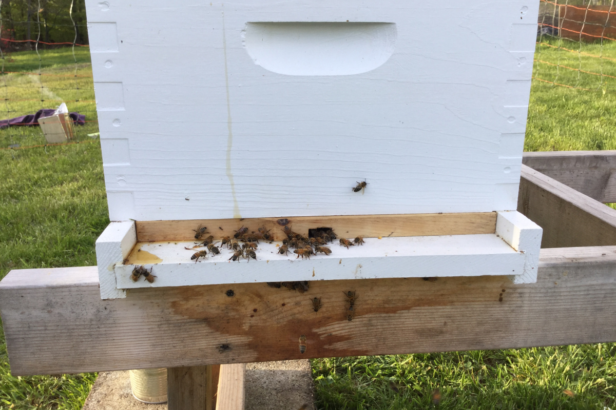 Bee Keeping: Filling a New Hive