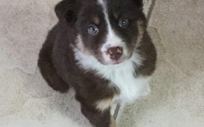 Meet Aspen!